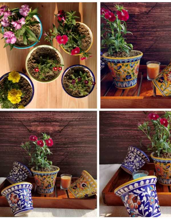 Colourful Planters by Raminder Kochar