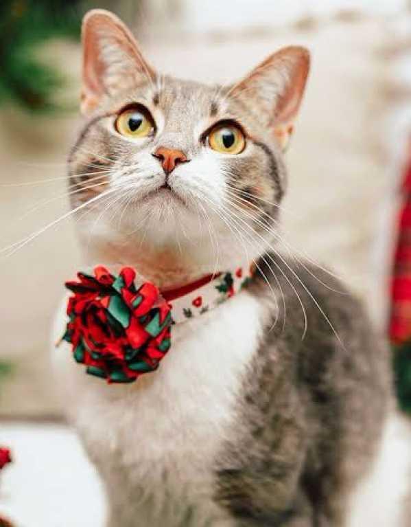 2) Fancy Collars