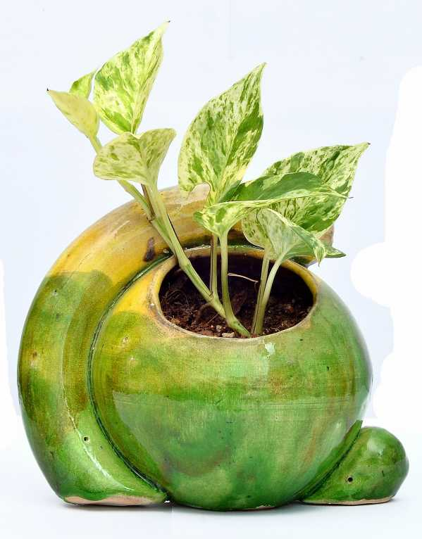 Here's Where To Get Your Air-Purifying Plants From