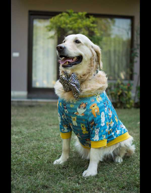 Dress up your Pets in the Cutest Garments and Accessories!