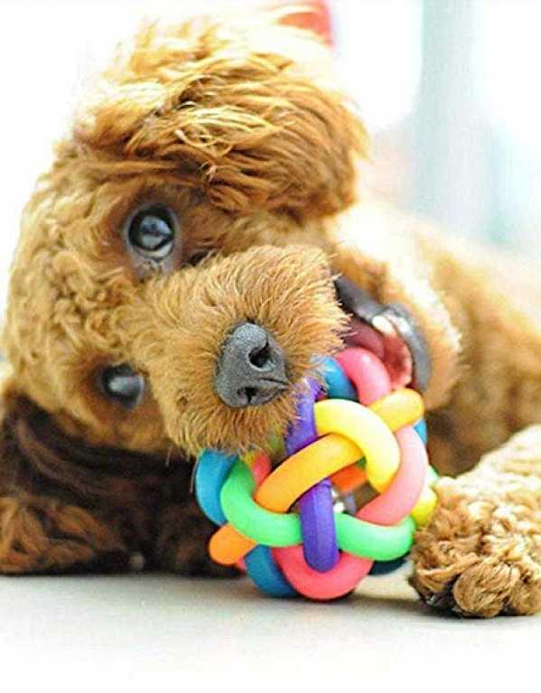 3.Chew Toy